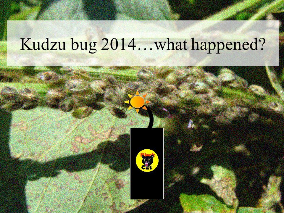 Kudzu bug 2014…what happened