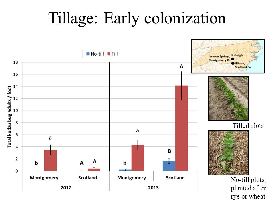 Tillage: Early colonization Tilled plots No-till plots, planted after rye or wheat