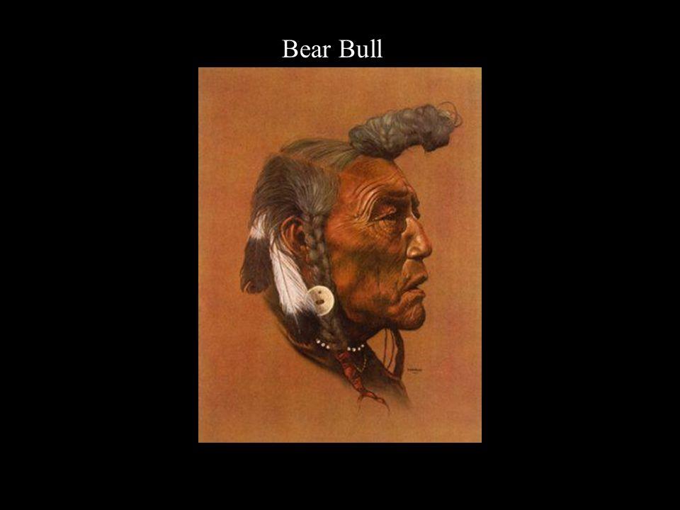 Bear Bull