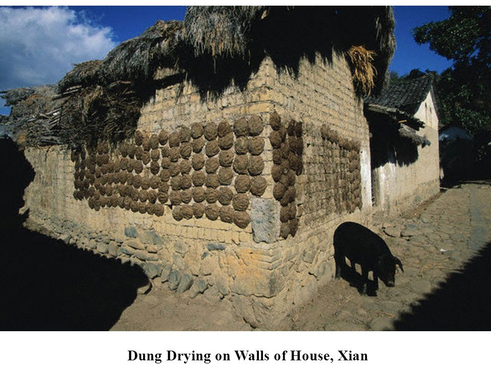 Dung Drying on Walls of House, Xian
