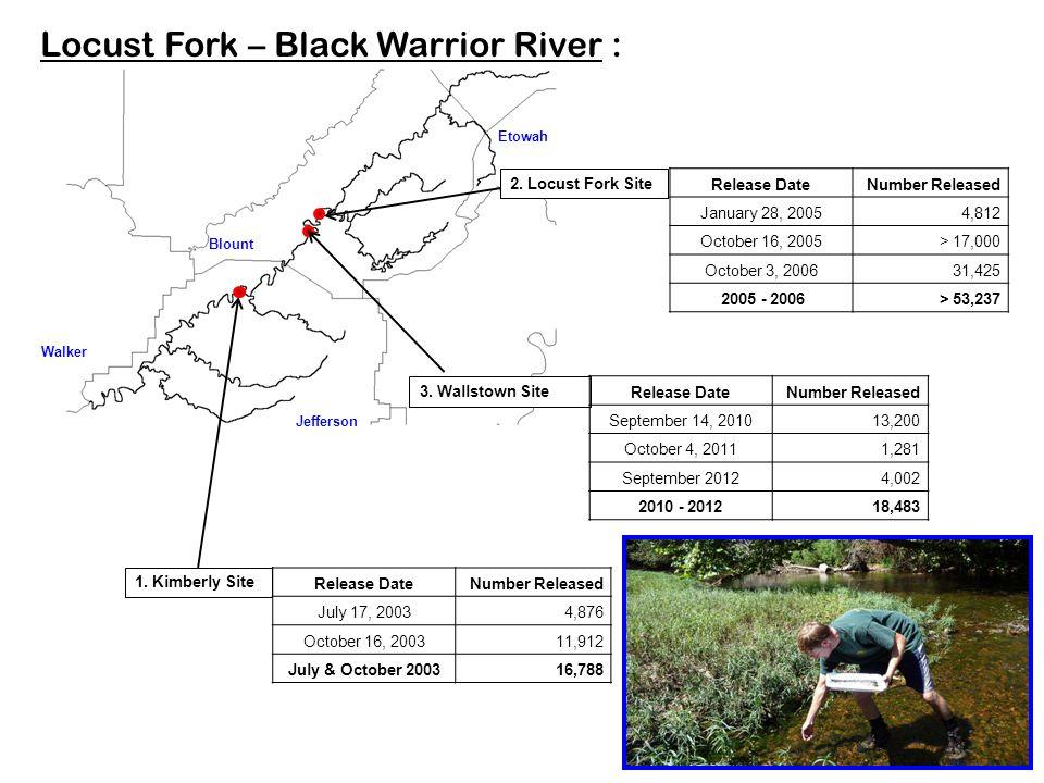 Jefferson Blount Locust Fork – Black Warrior River : Etowah Walker 1. Kimberly Site 2. Locust Fork Site 3. Wallstown Site Release DateNumber Released