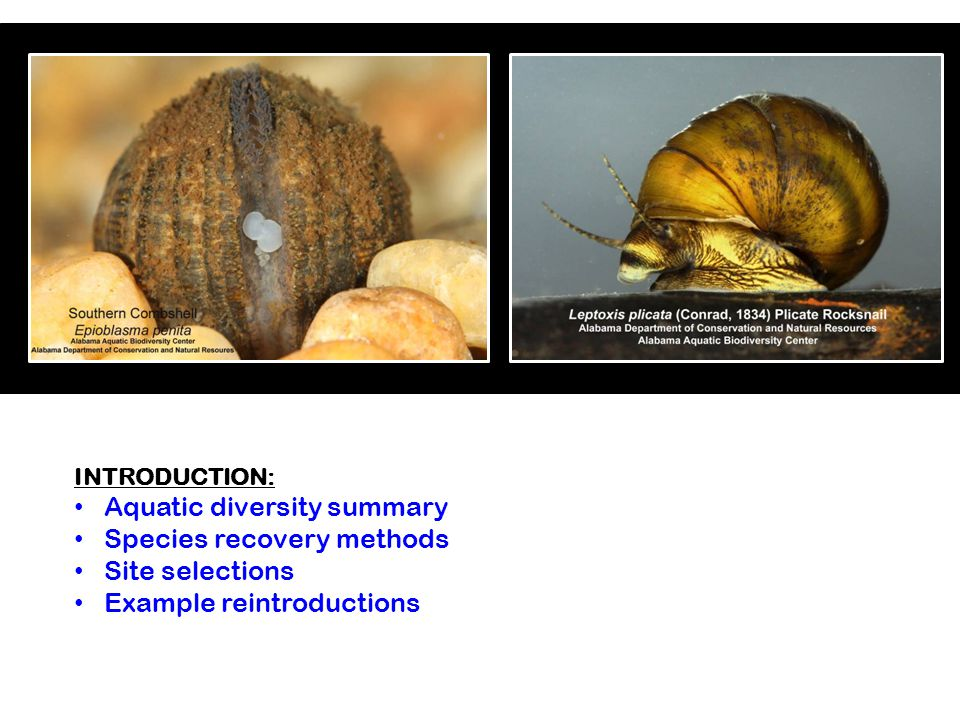 INTRODUCTION: Aquatic diversity summary Species recovery methods Site selections Example reintroductions