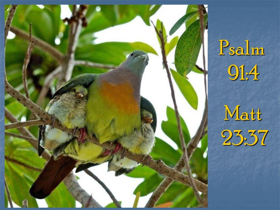Psalm91:4 Matt23:37