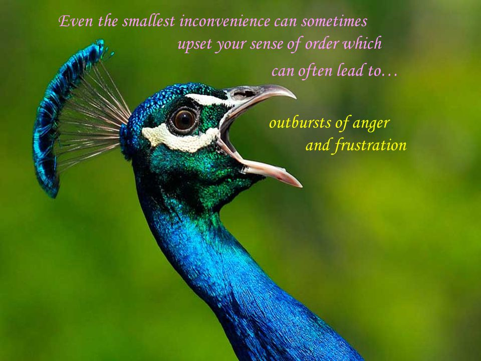 Even the smallest inconvenience can sometimes upset your sense of order which can often lead to… outbursts of anger and frustration