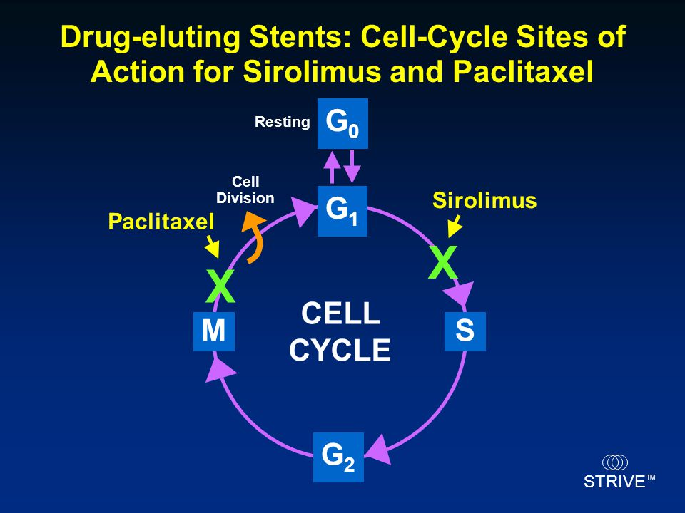 STRIVE TM Cell Division G1G1 M G2G2 G0G0 CELL CYCLE Resting S Sirolimus X Paclitaxel X Drug-eluting Stents: Cell-Cycle Sites of Action for Sirolimus a