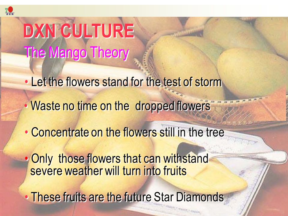 DXN CULTURE DXN CULTURE The Mango Theory The Mango Theory