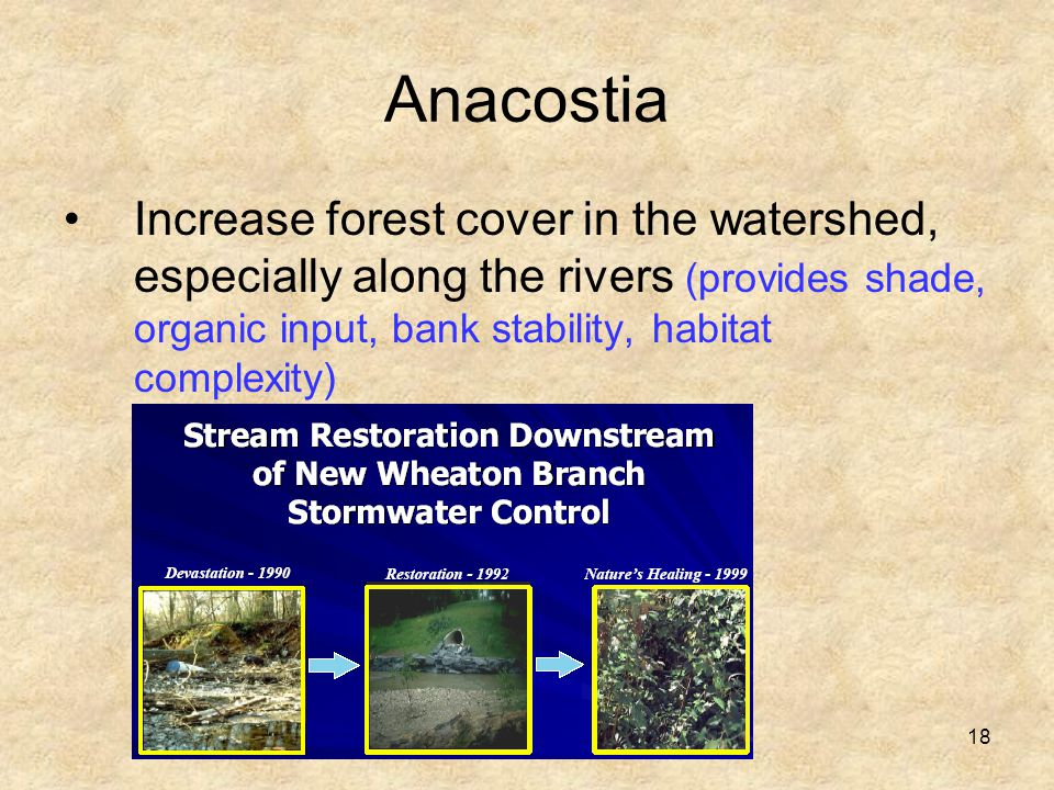 18 Anacostia Increase forest cover in the watershed, especially along the rivers (provides shade, organic input, bank stability, habitat complexity)