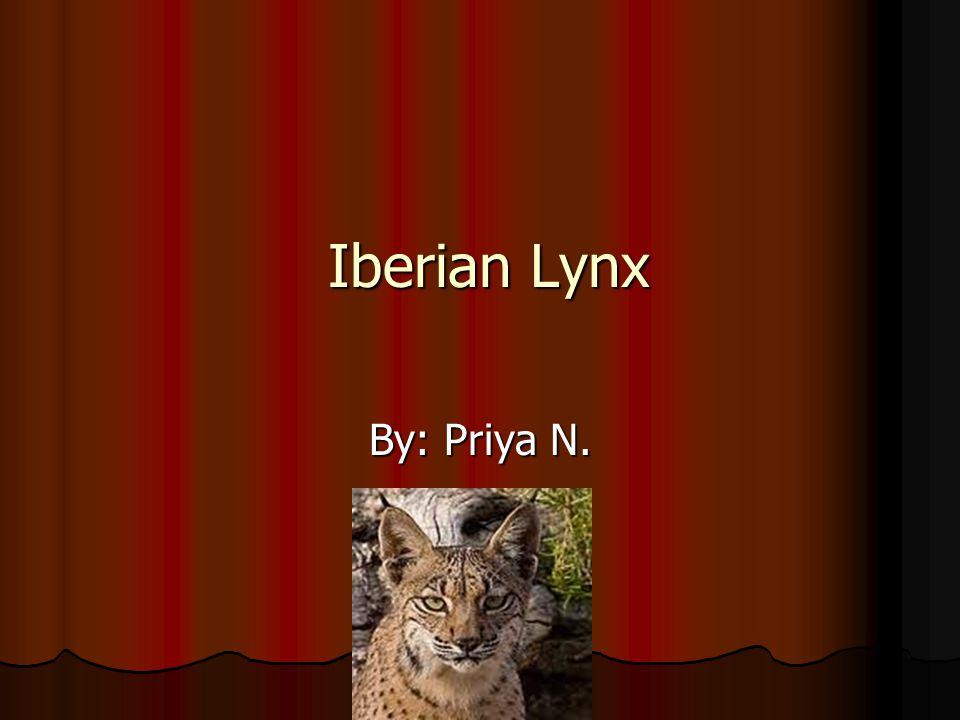 Iberian Lynx Iberian Lynx By: Priya N.