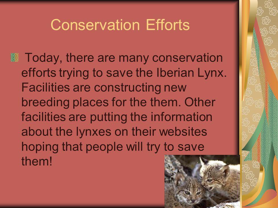 Please Save The Iberian Lynxes.