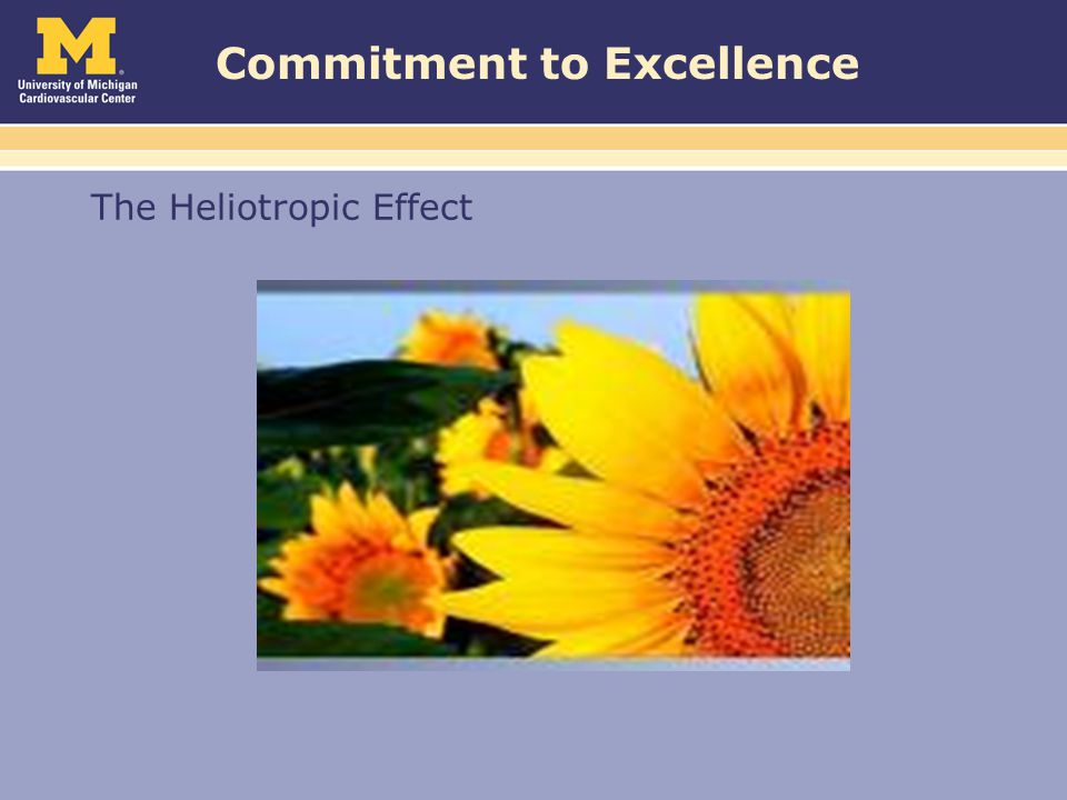 Commitment to Excellence The Heliotropic Effect