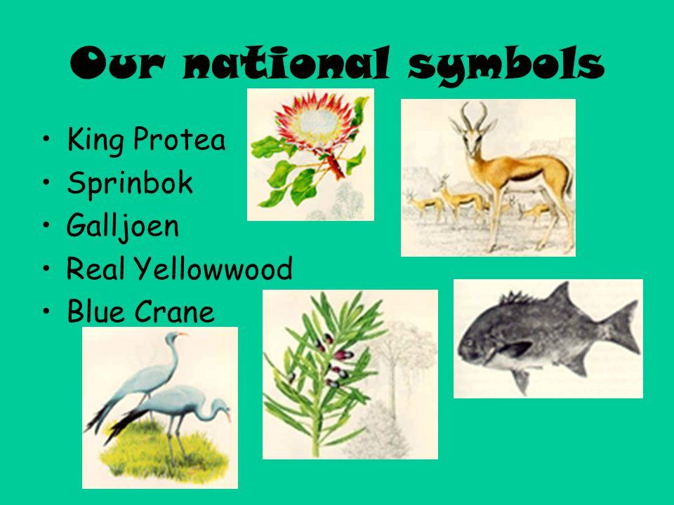 Our national symbols King Protea Sprinbok Galljoen Real Yellowwood Blue Crane