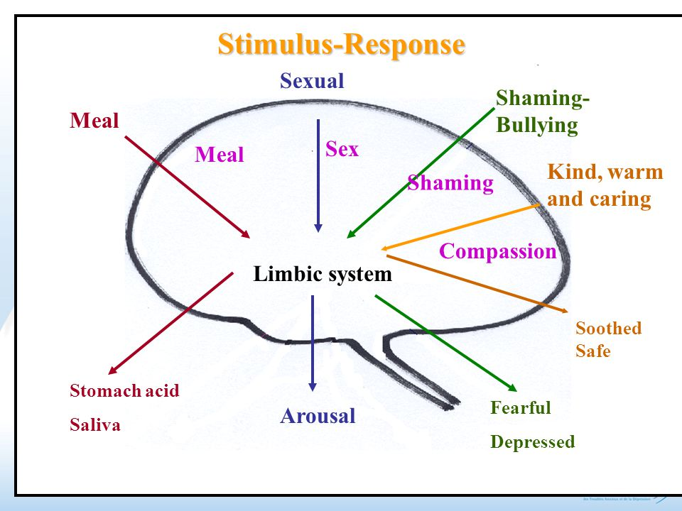 Meal Sexual Shaming- Bullying Limbic system Stomach acid Saliva Arousal Fearful Depressed Stimulus-Response Kind, warm and caring Soothed Safe Meal Se