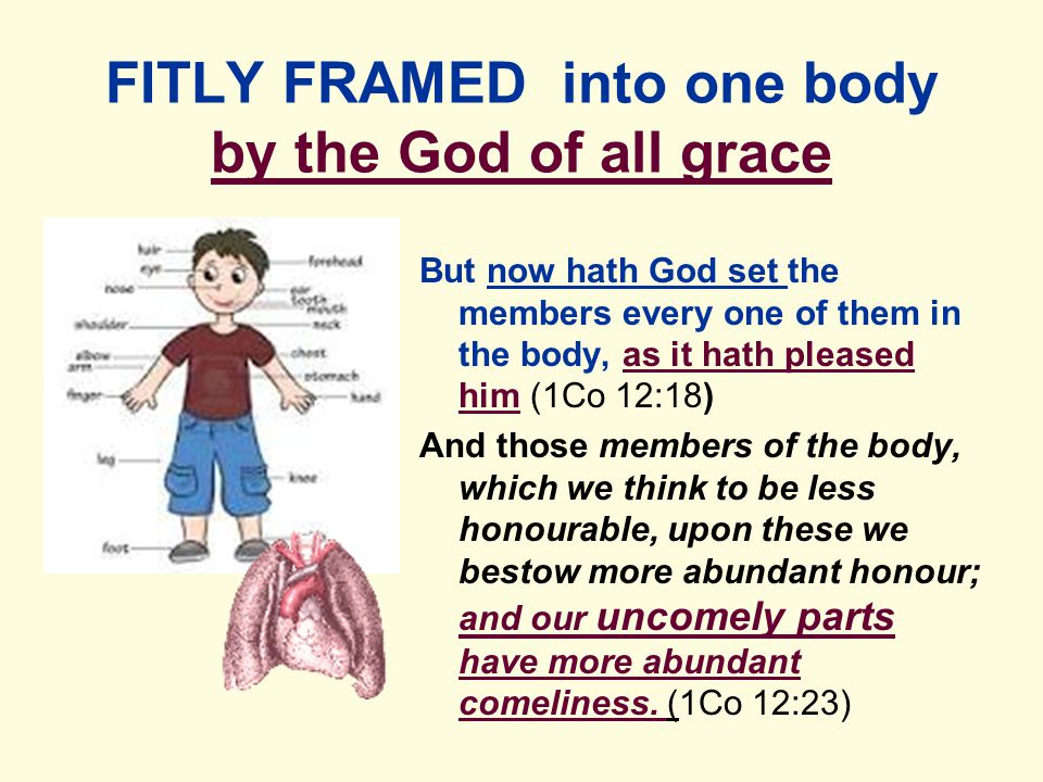 FITLY FRAMED into one body by the God of all grace But now hath God set the members every one of them in the body, as it hath pleased him (1Co 12:18) And those members of the body, which we think to be less honourable, upon these we bestow more abundant honour; and our uncomely parts have more abundant comeliness.