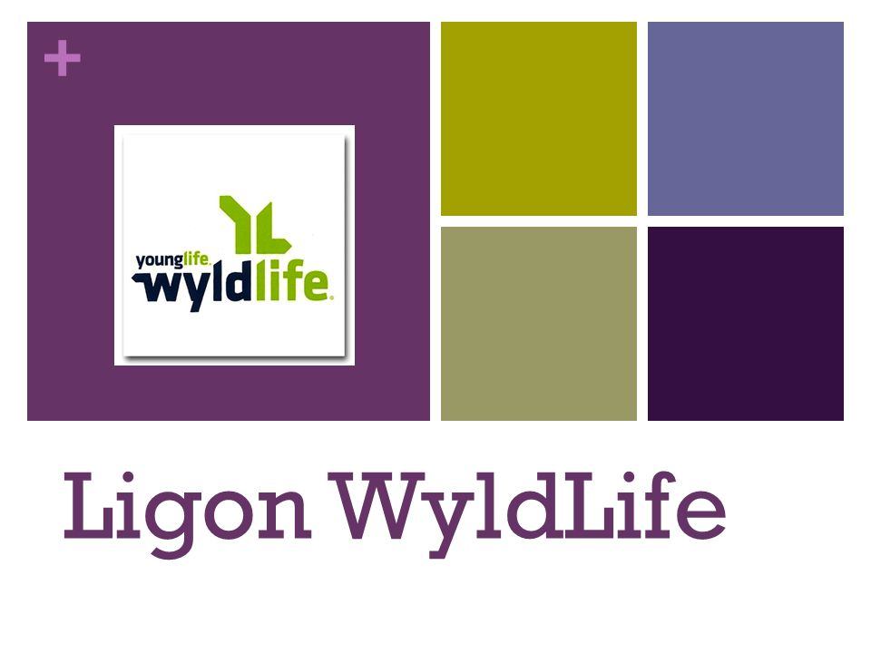 + What is WyldLife.WyldLife is simple.
