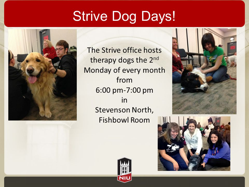 Strive Dog Days! The Strive office hosts therapy dogs the 2 nd Monday of every month from 6:00 pm-7:00 pm in Stevenson North, Fishbowl Room