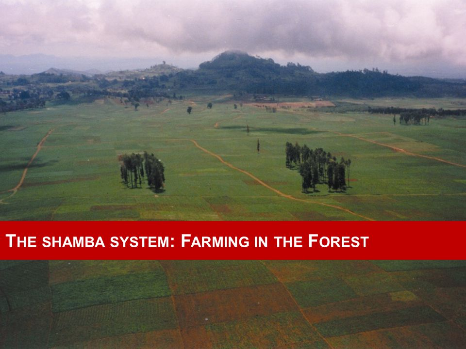 T HE SHAMBA SYSTEM : F ARMING IN THE F OREST