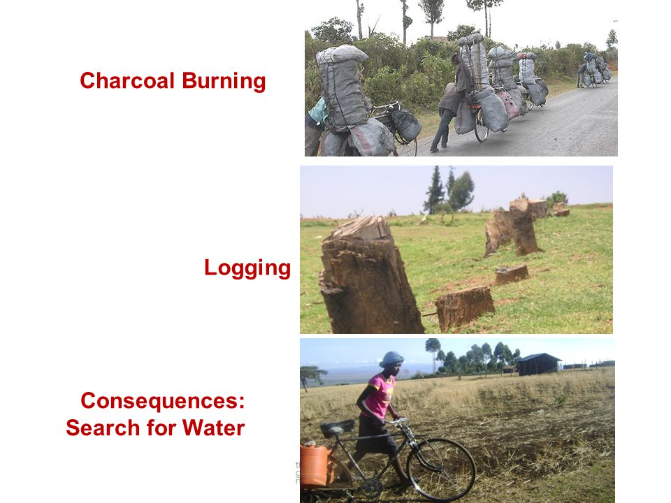 Charcoal Burning Consequences: Search for Water Logging