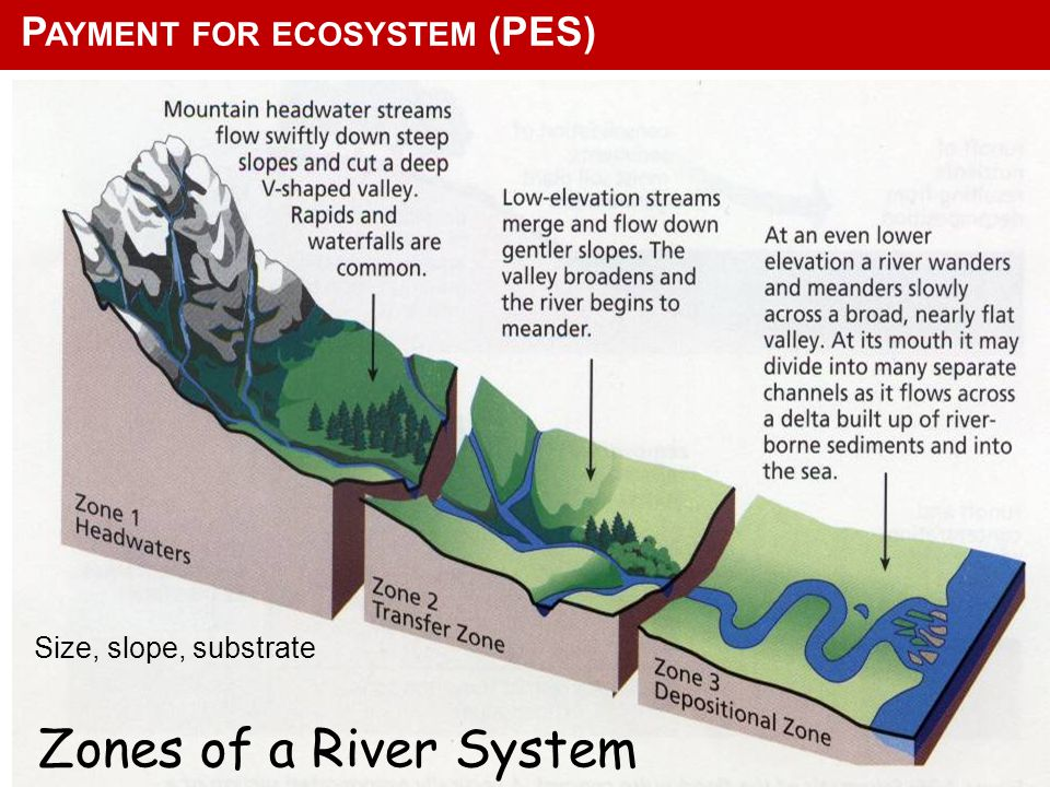 Zones of a River System Freshwater Systems and Biodiversity Change with Habitat Size, slope, substrate P AYMENT FOR ECOSYSTEM (PES)