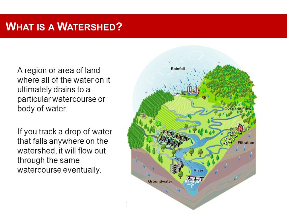 W HY PRIORITY WATERSHEDS GBM HAS BEEN ENGAGING COMMUNITIES IN THE WHOLE COUNTRY TO PLANT TREES IN AND AROUND THE WATER CATCHMENTS.