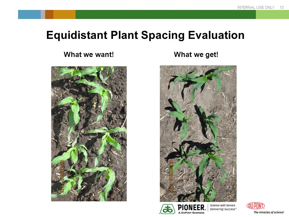 INTERNAL USE ONLY 13 Equidistant Plant Spacing Evaluation What we want! What we get!