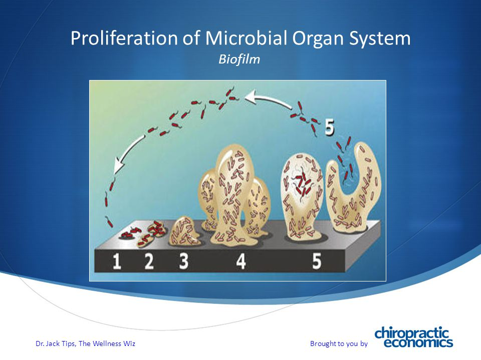 Proliferation of Microbial Organ System Biofilm Dr. Jack Tips, The Wellness Wiz Brought to you by