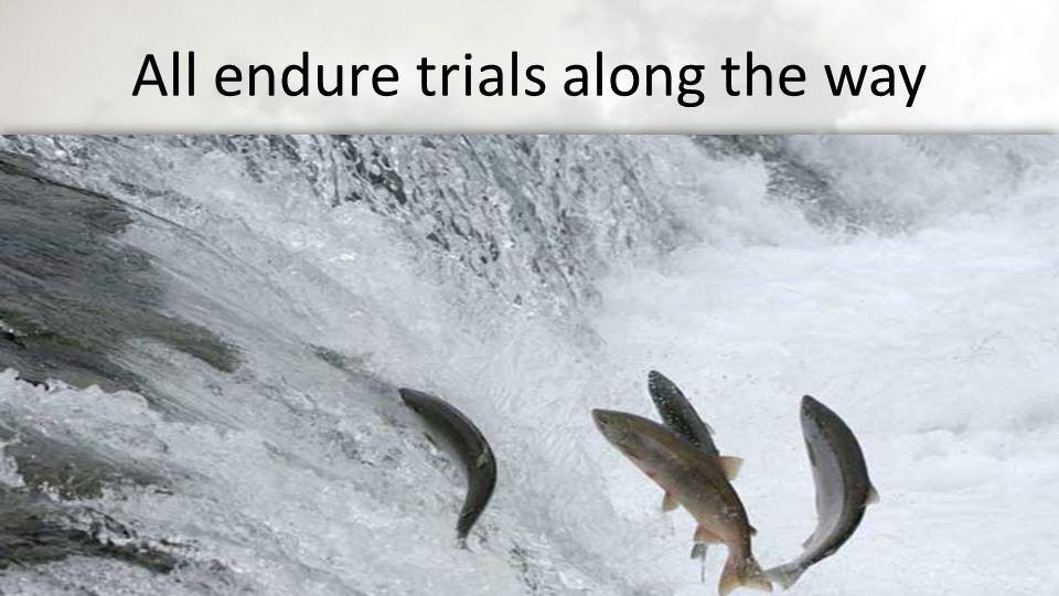 All endure trials along the way