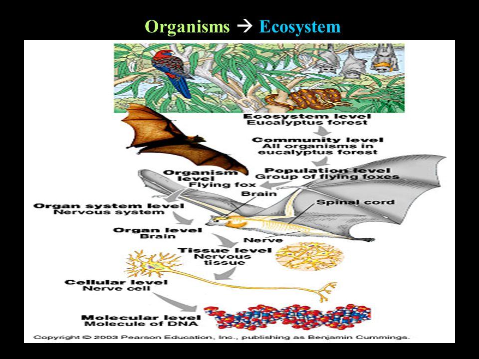 Organisms  Ecosystem