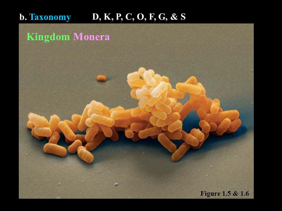 b. Taxonomy Kingdom Monera Figure 1.5 & 1.6 D, K, P, C, O, F, G, & S