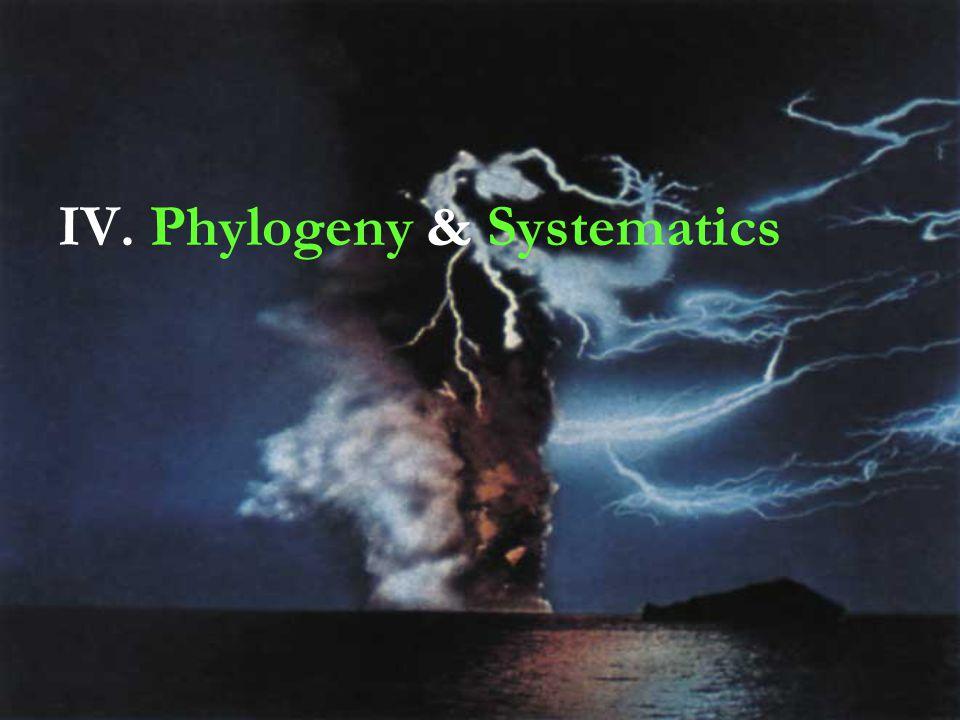 IV. Phylogeny & Systematics