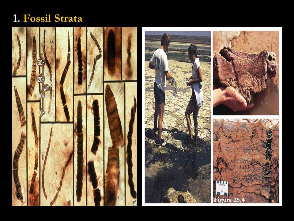 1. Fossil Strata Figure 25.4