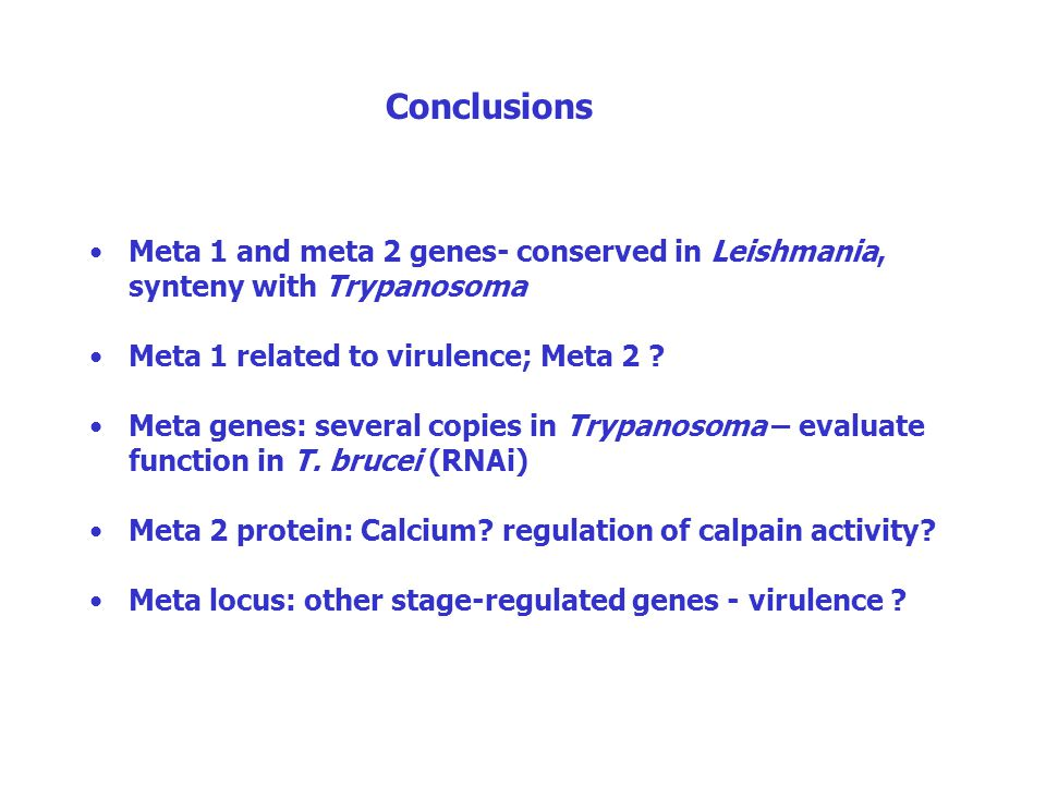Conclusions Meta 1 and meta 2 genes- conserved in Leishmania, synteny with Trypanosoma Meta 1 related to virulence; Meta 2 ? Meta genes: several copie