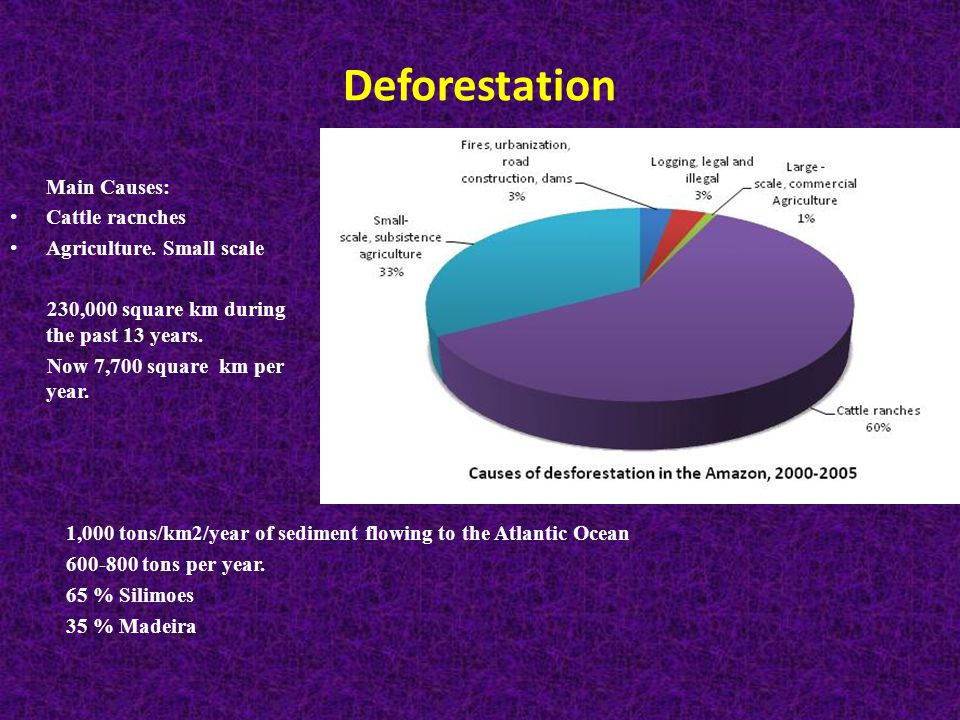 Deforestation Main Causes: Cattle racnches Agriculture.