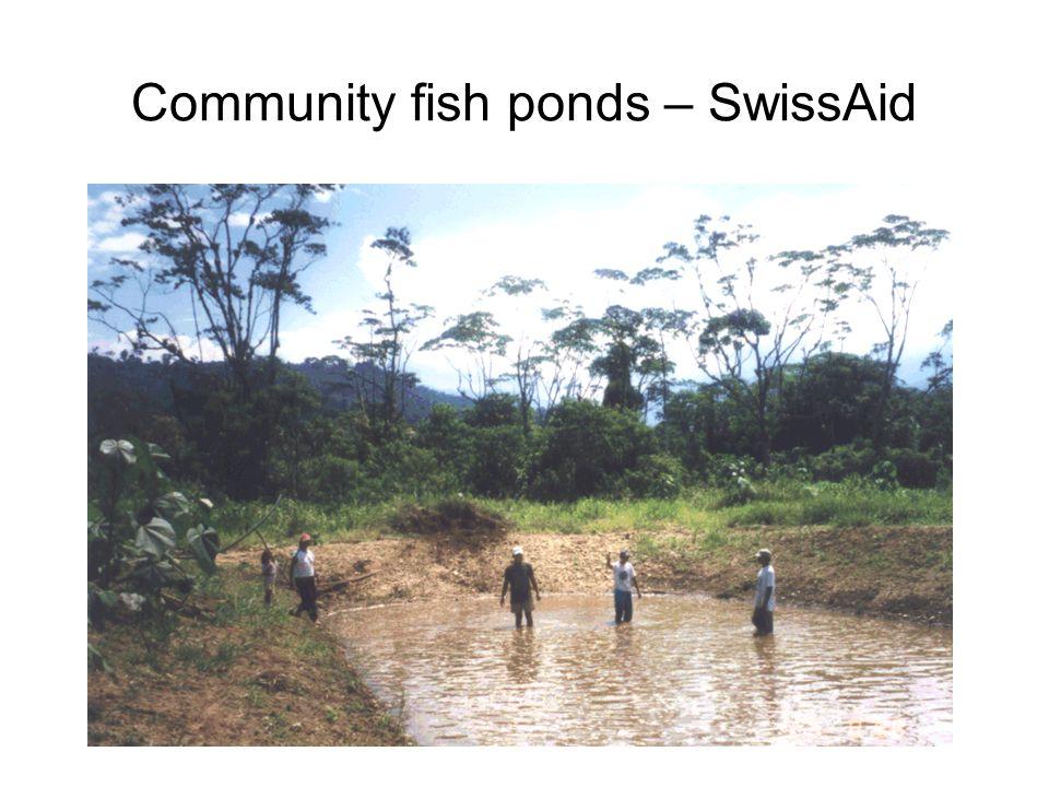 Community fish ponds – SwissAid