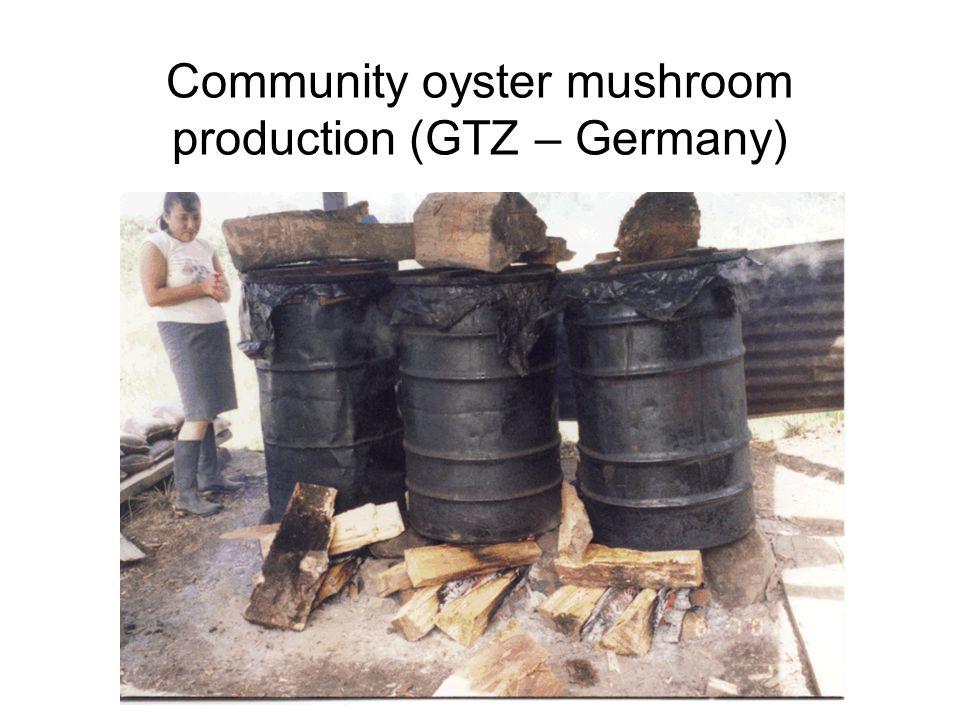Community oyster mushroom production (GTZ – Germany)
