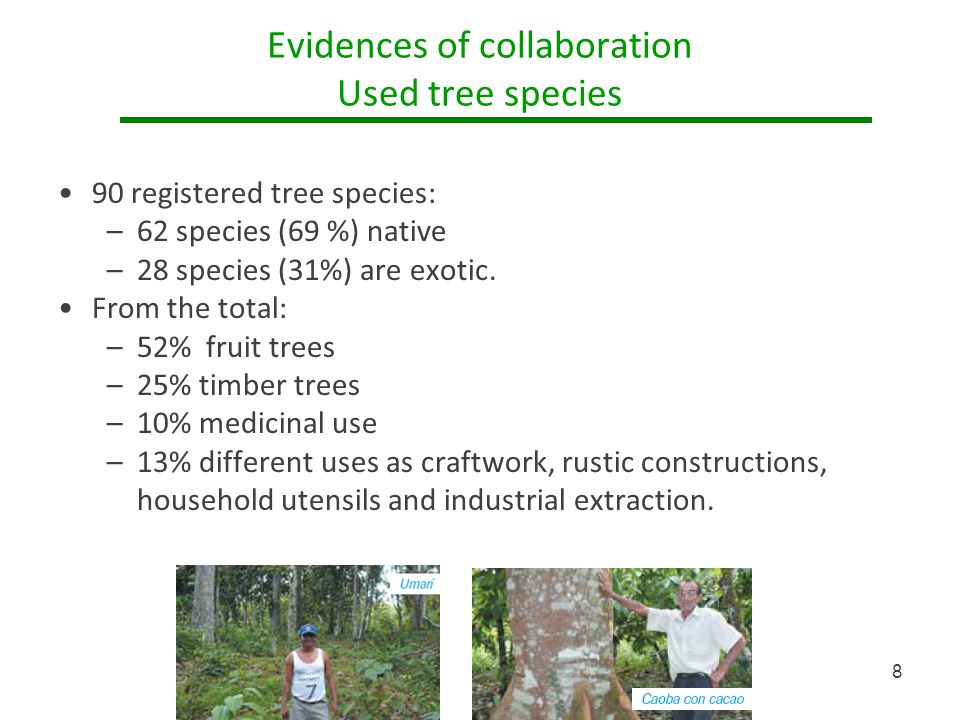 Evidences of collaboration Used tree species 90 registered tree species: –62 species (69 %) native –28 species (31%) are exotic.