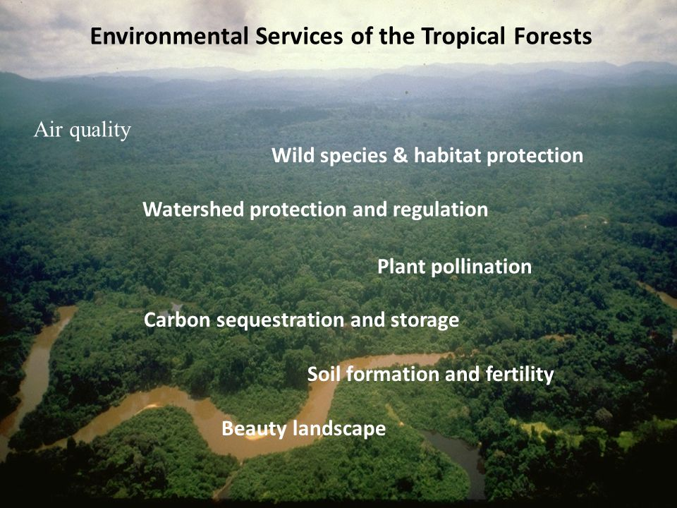 What are ecosystem services after all? The Forest Climate Alliance Strategic Advice to National Policy Initiatives Biodiversity Offsets Carbon sequest