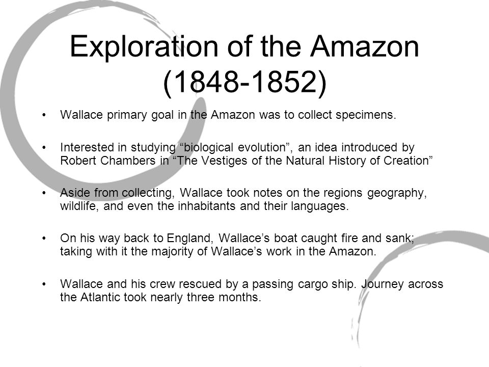 Exploration of the Amazon (1848-1852) Wallace primary goal in the Amazon was to collect specimens.