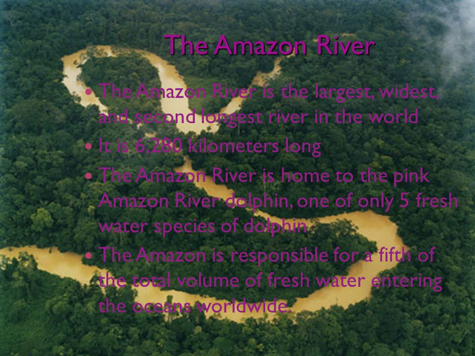 The Amazon River The Amazon River is the largest, widest, and second longest river in the world It is 6,280 kilometers long The Amazon River is home to the pink Amazon River dolphin, one of only 5 fresh water species of dolphin The Amazon is responsible for a fifth of the total volume of fresh water entering the oceans worldwide.