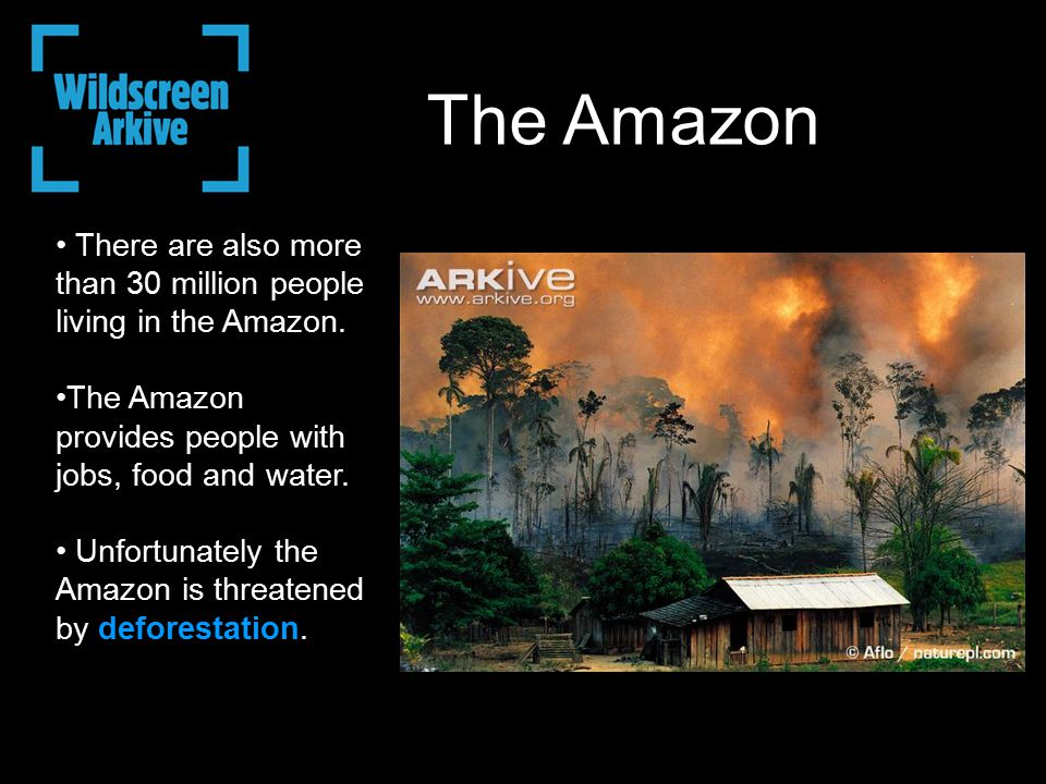 There are also more than 30 million people living in the Amazon. The Amazon provides people with jobs, food and water. Unfortunately the Amazon is thr