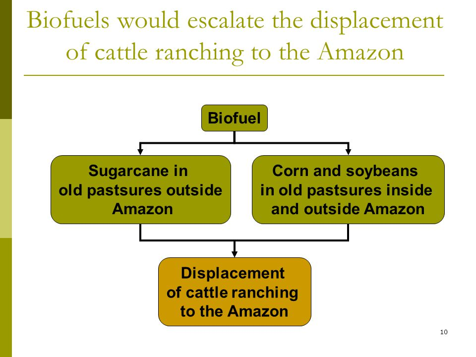 10 Biofuels would escalate the displacement of cattle ranching to the Amazon Biofuel Displacement of cattle ranching to the Amazon Sugarcane in old pastsures outside Amazon Corn and soybeans in old pastsures inside and outside Amazon