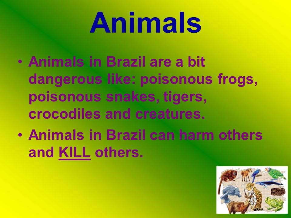 Animals Animals in Brazil are a bit dangerous like: poisonous frogs, poisonous snakes, tigers, crocodiles and creatures.