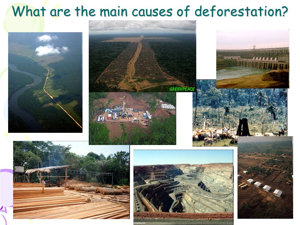 5 Agriculture There is (mainly) cattle ranching and soya production Why are they clearing the forest for cattle ranching.