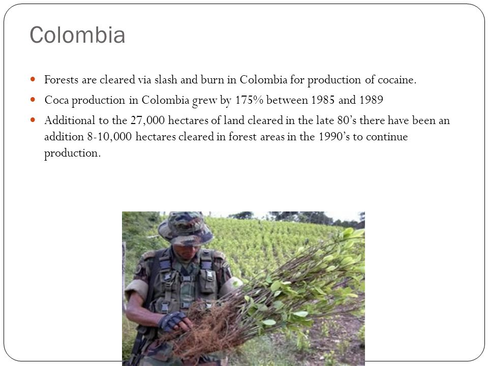 Colombia Forests are cleared via slash and burn in Colombia for production of cocaine. Coca production in Colombia grew by 175% between 1985 and 1989