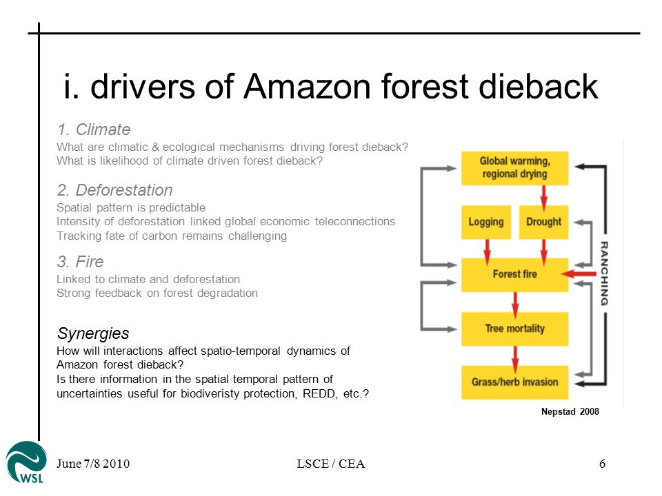 June 7/8 2010LSCE / CEA6 i. drivers of Amazon forest dieback Nepstad 2008 Synergies How will interactions affect spatio-temporal dynamics of Amazon fo
