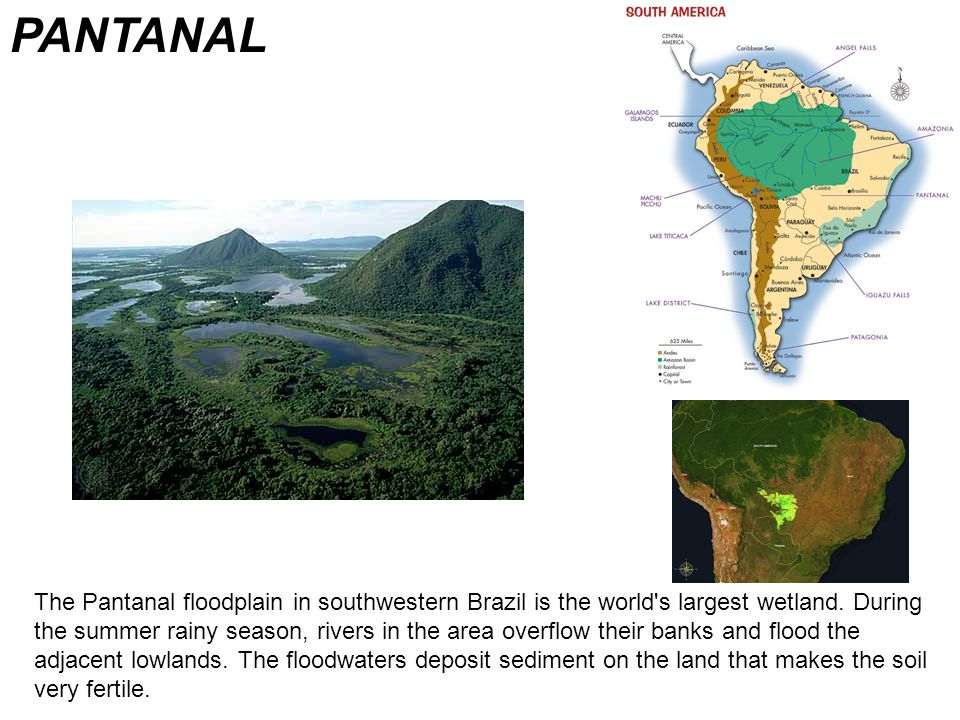PANTANAL The Pantanal floodplain in southwestern Brazil is the world s largest wetland.