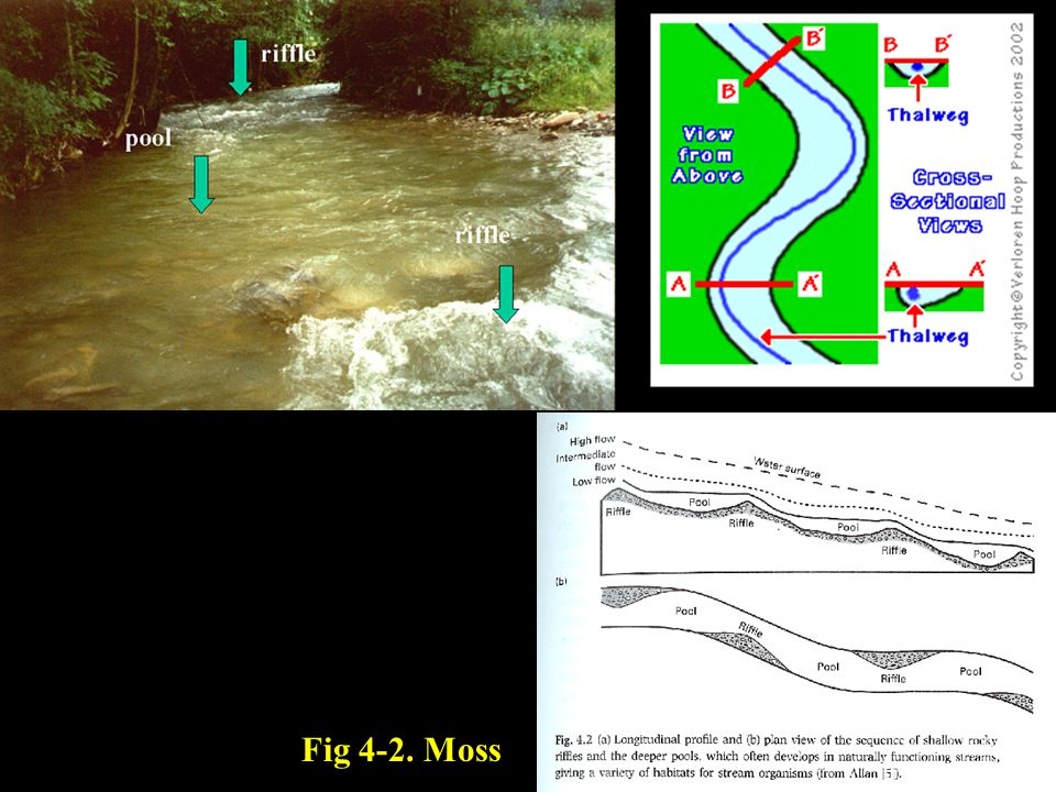 Fig 4-2. Moss