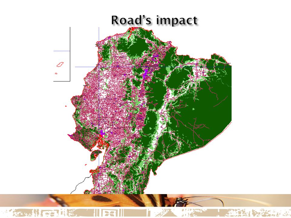 Exploitation area is a refugee of vulnerable endemic endangered species affected by the deforestation that will happen to start the Mine and the mineral dumps removing these species habitat.