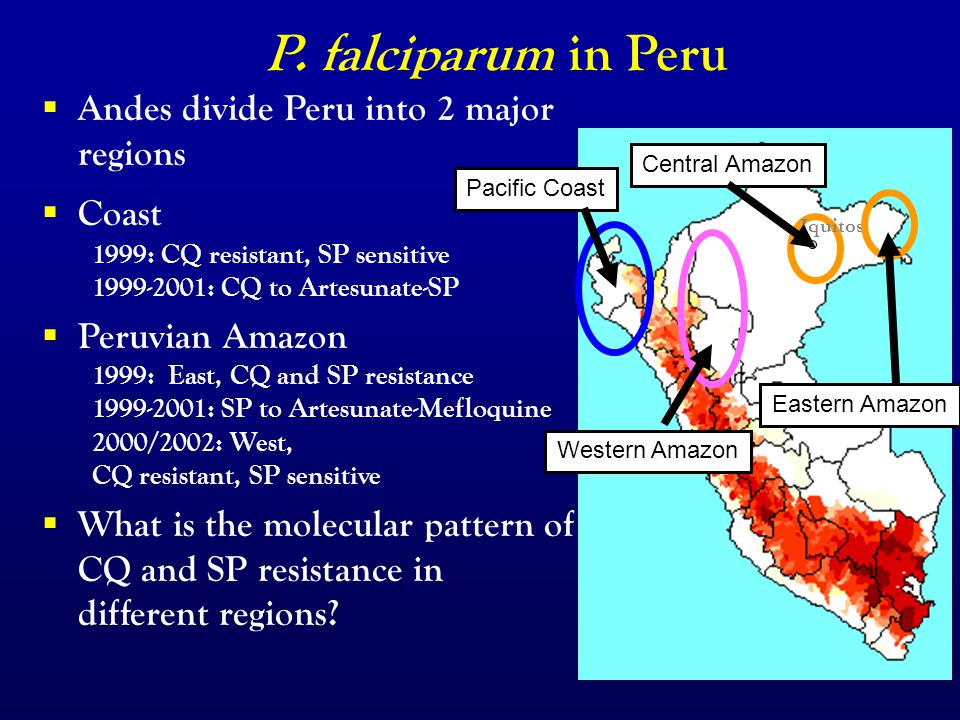 Malaria treatment in Peru  Andes divide Peru into 2 major regions  Coast 1999: CQ resistant, SP sensitive 1999-2001: CQ to Artesunate-SP  Peruvian Amazon 1999: East, CQ and SP resistance 1999-2001: SP to Artesunate-Mefloquine 2000/2002: West, CQ resistant, SP sensitive  What is the molecular pattern of CQ and SP resistance in different regions.