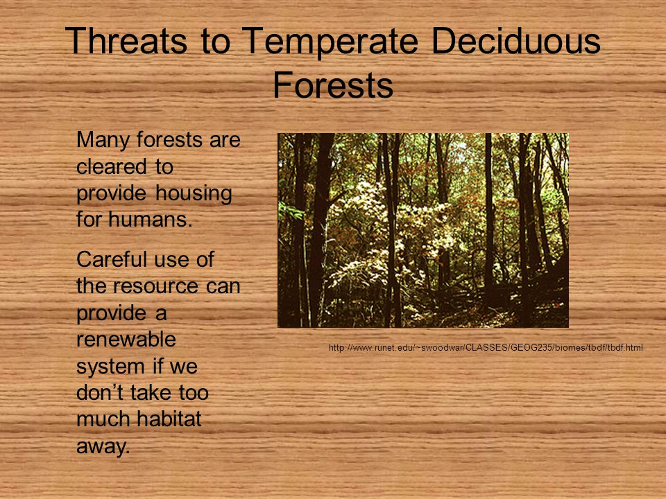 Threats to Temperate Deciduous Forests http://www.runet.edu/~swoodwar/CLASSES/GEOG235/biomes/tbdf/tbdf.html Many forests are cleared to provide housing for humans.
