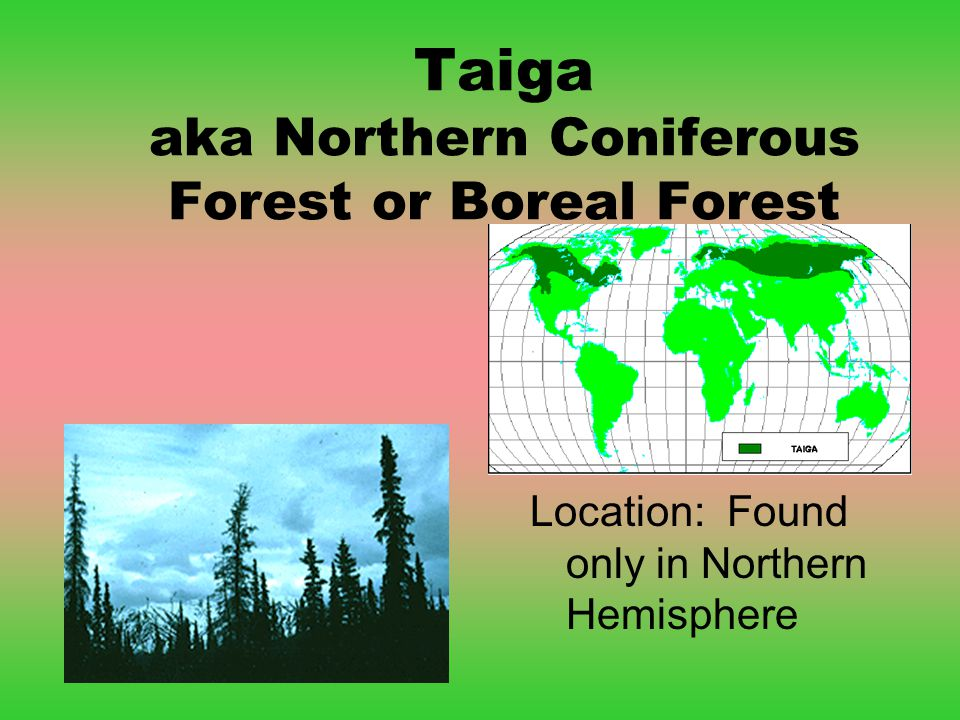 Taiga aka Northern Coniferous Forest or Boreal Forest Location: Found only in Northern Hemisphere
